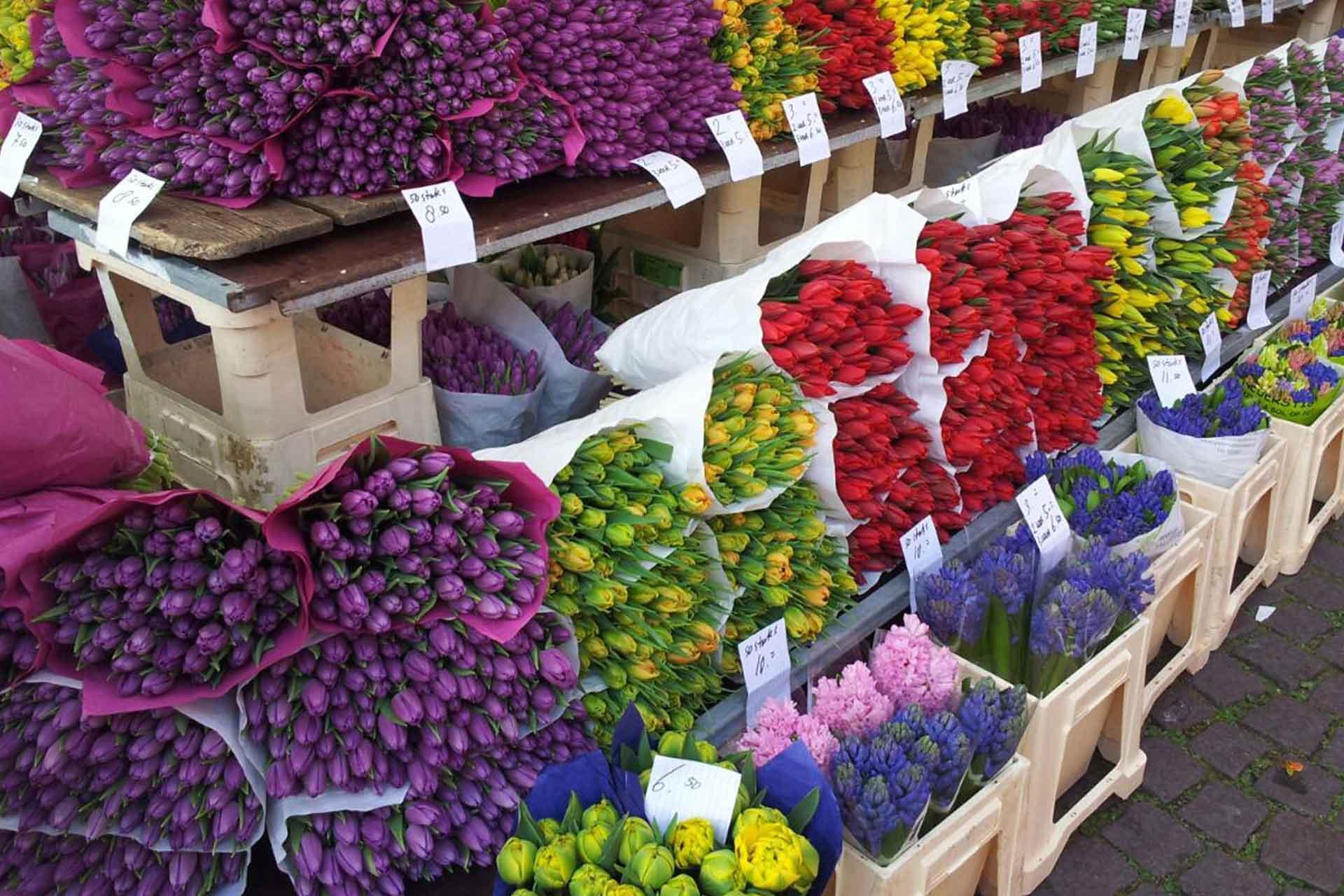The Flower Market in Maastricht